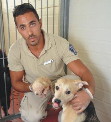הצילו את הכלבים