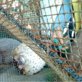 מלכודות דיג נתפסו בנמל אילת