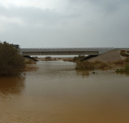 בזכות הגשם בסוכות: צפויה פריחה נדירה בערבה