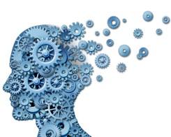 המוח - הקופסה האפורה