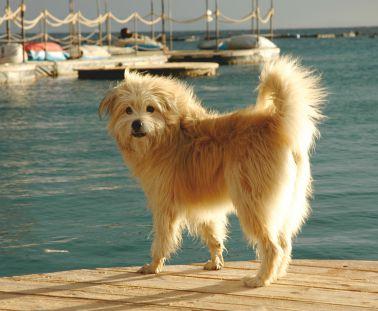 כלב מעולם אחר
