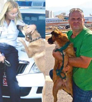 הכלבים, הדוקטורים והפייסבוק