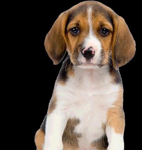 התעלל בכלב