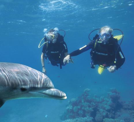 ריף הדולפינים – אתר אקולוגי ייחודי בעולם