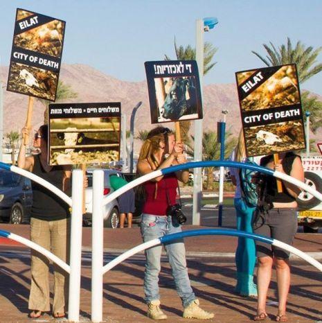 מעצר המפגינה: האם יש דמוקרטיה באילת?