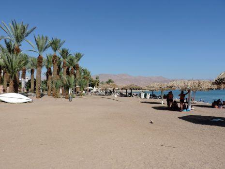 חוף הזהב יחזור לאילתים