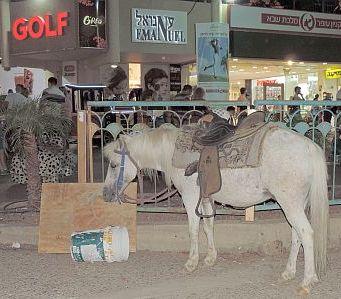 אין חדש בטיילת: רוכלות בלתי חוקית וסוס פוני