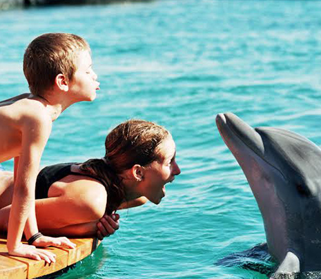 ריף הדולפינים באילת – חוויה שאסור להחמיץ