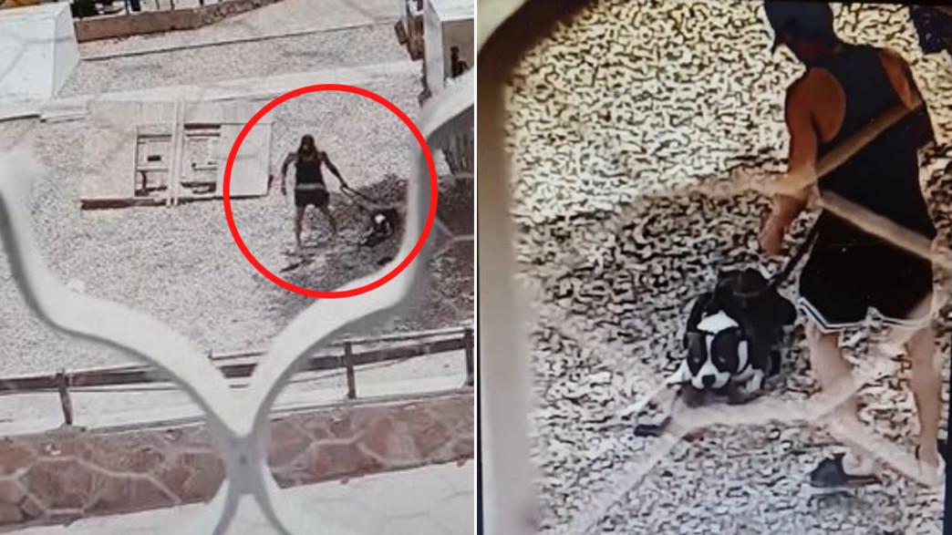 נעצר חשוד בהריגת החתול באילת על ידי כלב פיטבול
