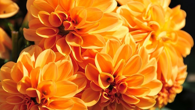 זר פרחים - לכל מטרה בכל מקום