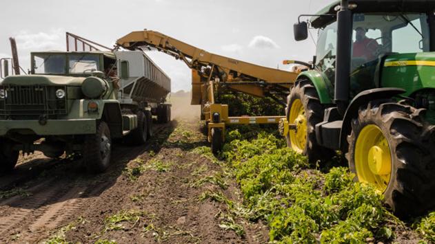 מהי חקלאות בת קיימא