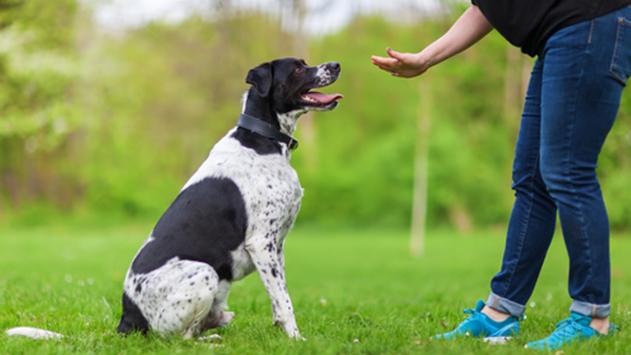 כך תמצאו את המאלף המתאים לכלב שלכם