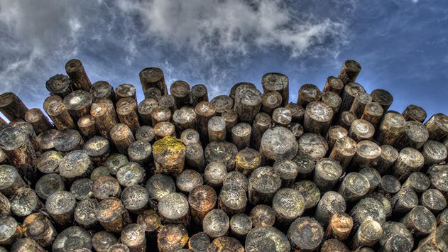 מה באמת צריך לדעת על כריתת עצים?