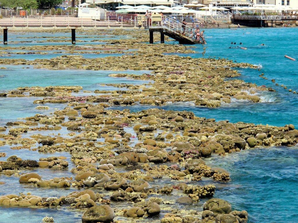 מחיר הסופה: שיקום ההרס בשונית האלמוגים יארך שנים
