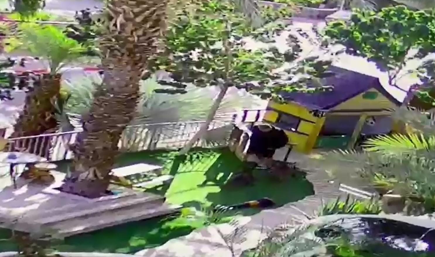 צפו: שני כלבי בולטרייר תוקפים תושב אילת
