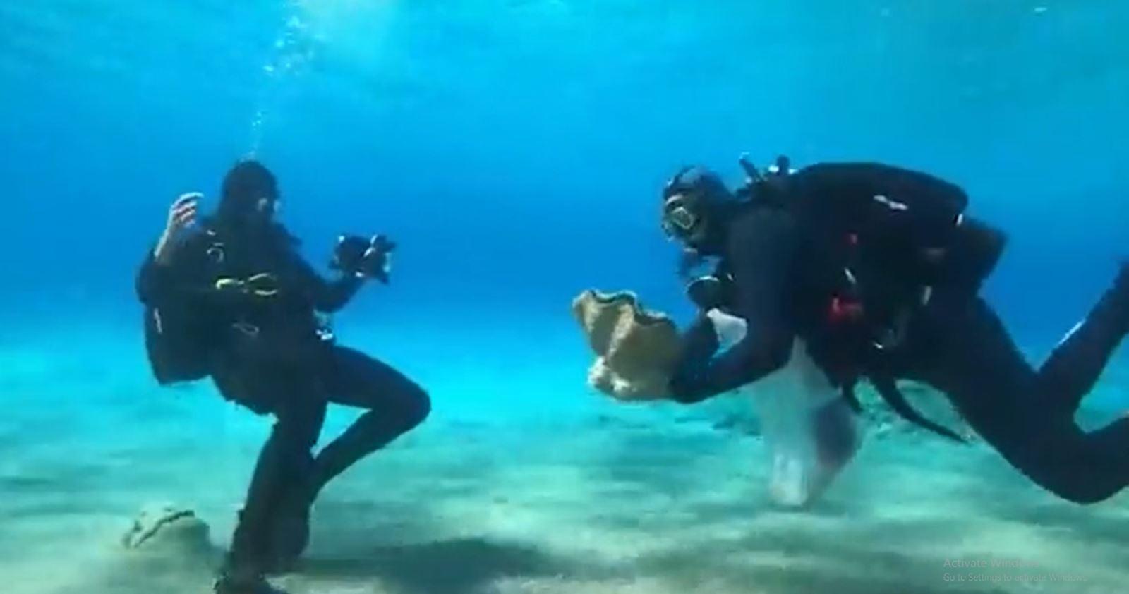 צדפת ענק הוצלה במפרץ אילת