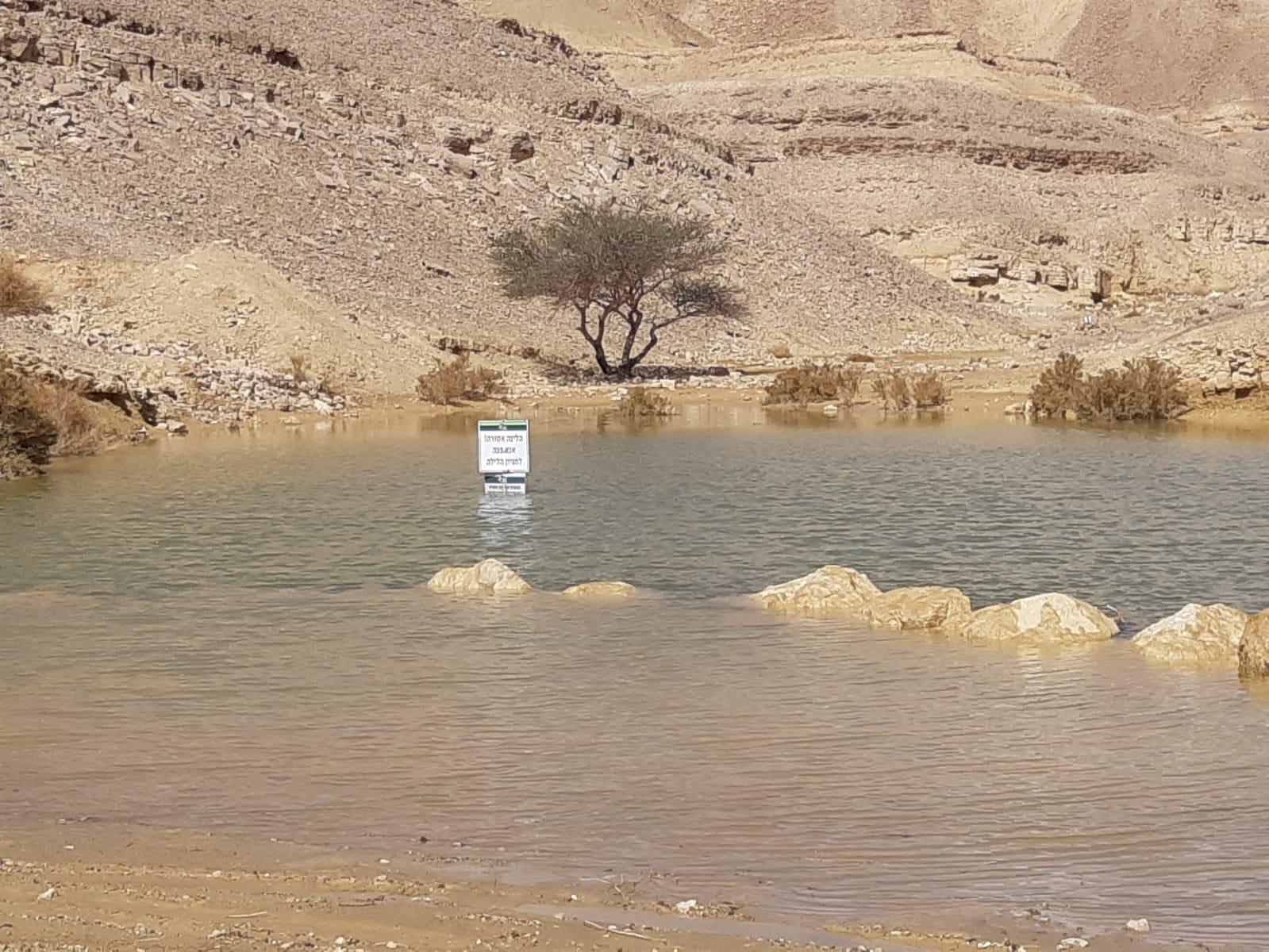 מרהיב: צפו בגבי המים סביב אילת מלאים במים