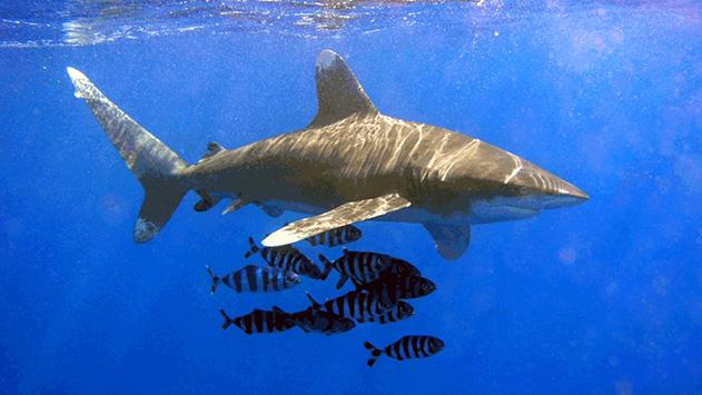 צפו: תייר הותקף על ידי כריש בחוף ים סוף