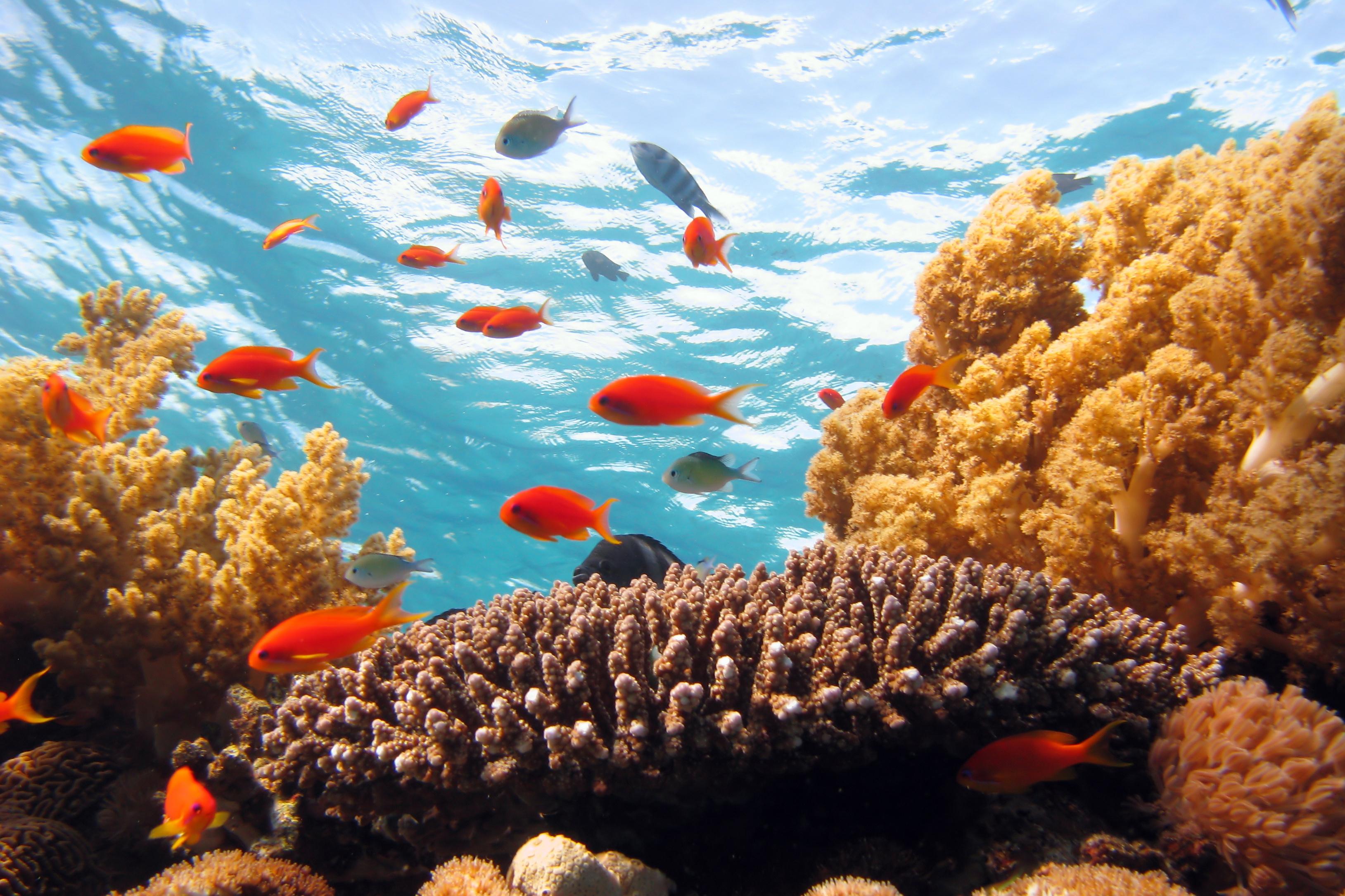 אתרי צלילה מומלצים באילת