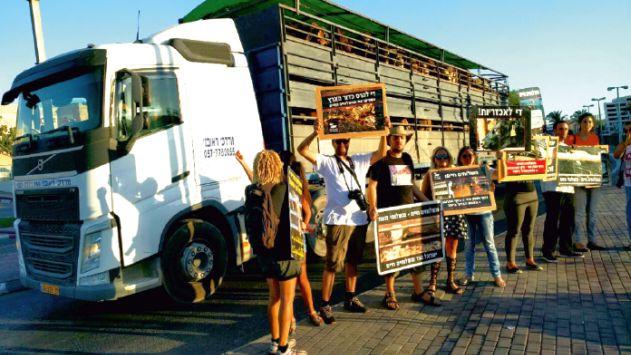 ''מקללים את נהגי משאיות הבקר באילת: 'תמותו'''