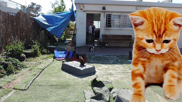 תם עידן החתולים