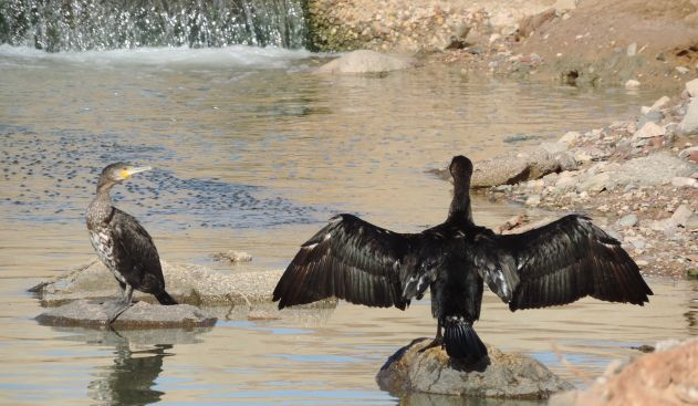 העופות של אילת פורחים בתוך הלכלוך