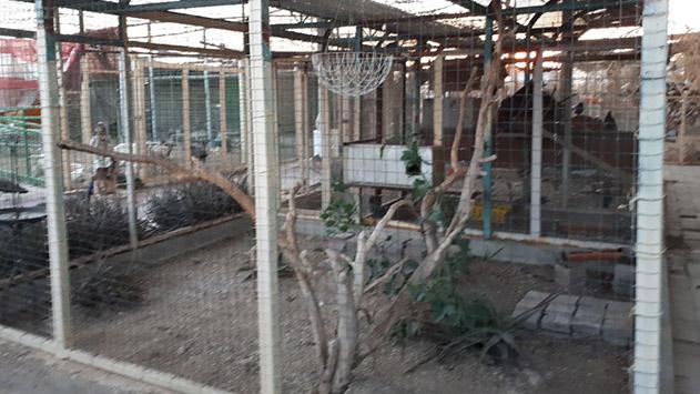 כושי רימון מאשים: ''הם השאירו  אחריהם כתמי דם של החיות''.