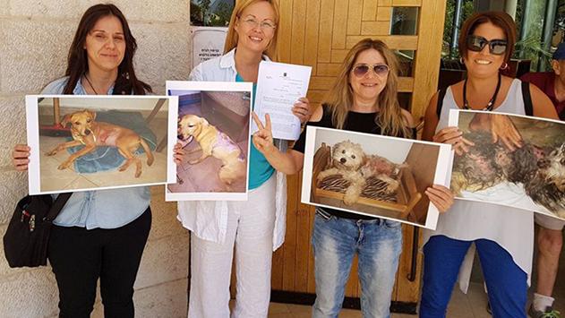 11 חודשי מאסר לשופך  החומצה על כלבים