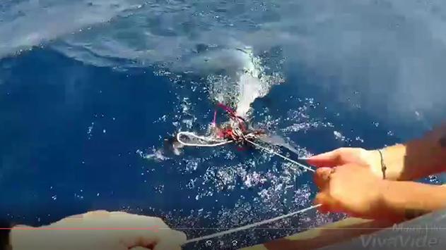 מדריכי מרכז הגלישה הצילו כריש עמלץ