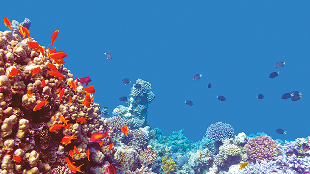 הגדלת רשימת דגי הנוי המותרים ביבוא מעמידה בסכנה את דגי מפרץ אילת