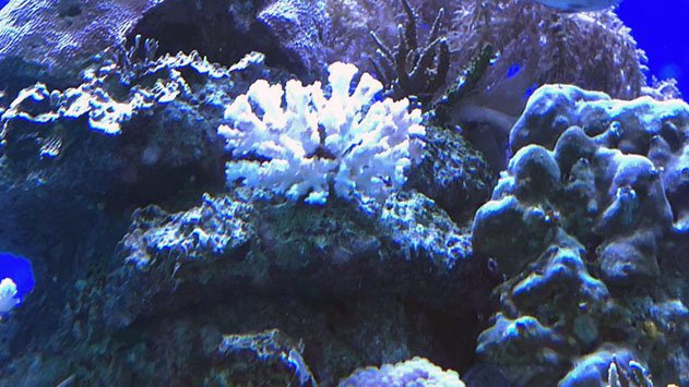 אלמוגים מתים בסתר