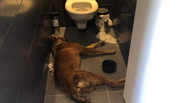 כלב התייבש גסס ומת ואיש לא סייע