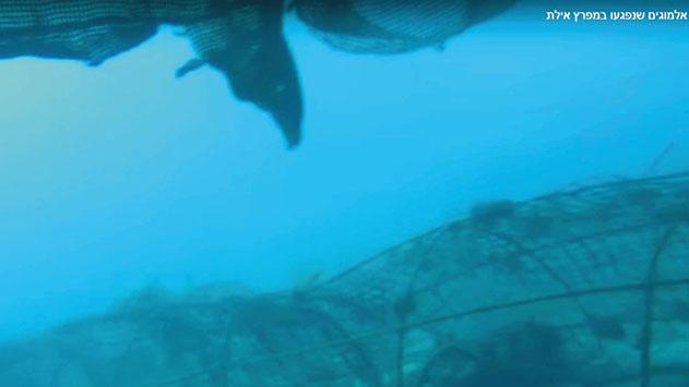 נזק לעשרות אלמוגים בריף הדולפינים