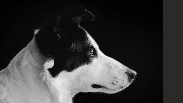 הרצאה:''האם כלבים באמת רואים בשחור ובלבן?''