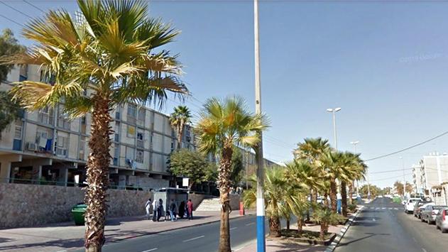 הישג לעיריית אילת: משרד החקלאות  הסיר דרישתו לעקירת דקלים בעיר
