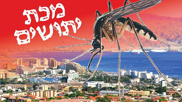 מיליוני יתושים מכים באילת ואוכלוסיית הקשישים סובלת במיוחד