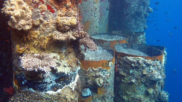 מחיר הרס שמורת האלמוגים  במזח קצא''א - 180,000 שקל