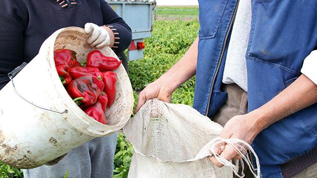 חקלאי מפארן תובע רבע מיליון  שקל מבעל חנות פרחים  ש''גנב'' לו עובד זר