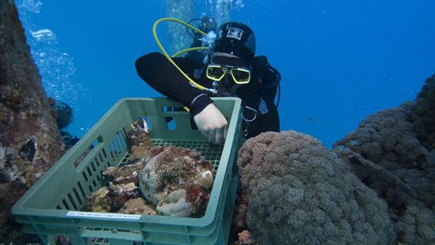מבצע ימי מיוחד הצילו את האלמוגים