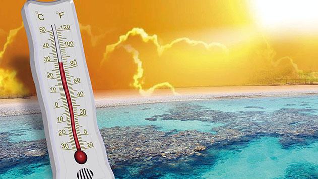 פרופ' גנין: בחודש מאי  האחרון התרחש אירוע  התחממות קיצונית  בטמפרטורת מפרץ אילת