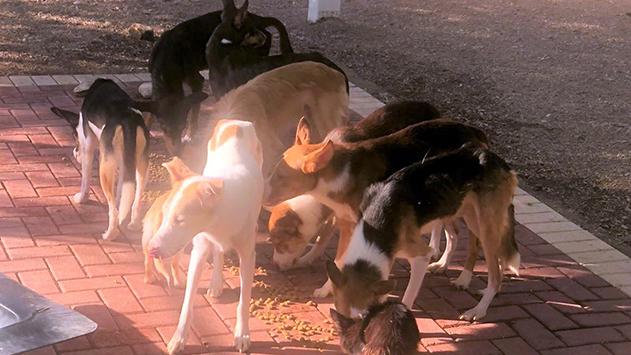 מבצע הצלת כלבים הסתיים בהצלחה
