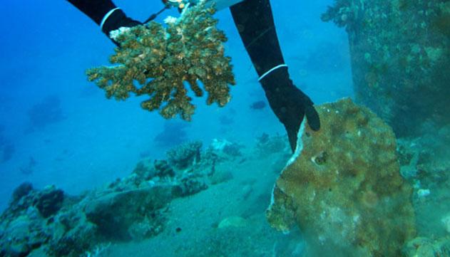 קצא''א מערערת לעליון על הרשעתה  באסון האלמוגים באילת