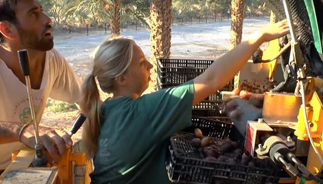 המתנדבים חוזרים לקיבוצי הערבה