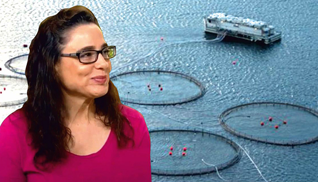 עמותת צלול נגד המכון לחקר ימים  ואגמים: ''מסכן את שלום שונית האלמוגים ומפרץ אילת''