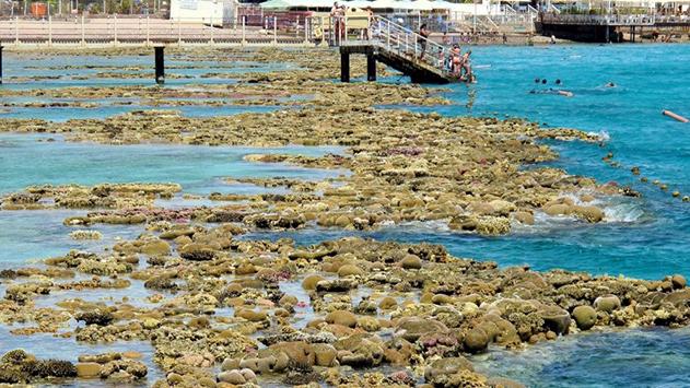 כמעט שיא חדש נשבר  בטמפרטורת המים במפרץ אילת