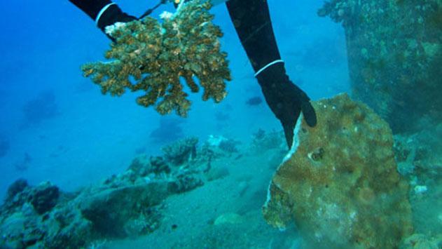 אסון האלמוגים: העליון דחה  ערעור קצא''א ומנהלה