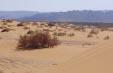 מינהל מקרקעי ישראל עצר את הרס חולות סמר