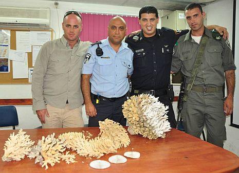 שני תושבי נצרת חשודים בגניבת אלמוגים