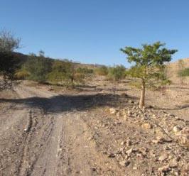 רצים במדבר