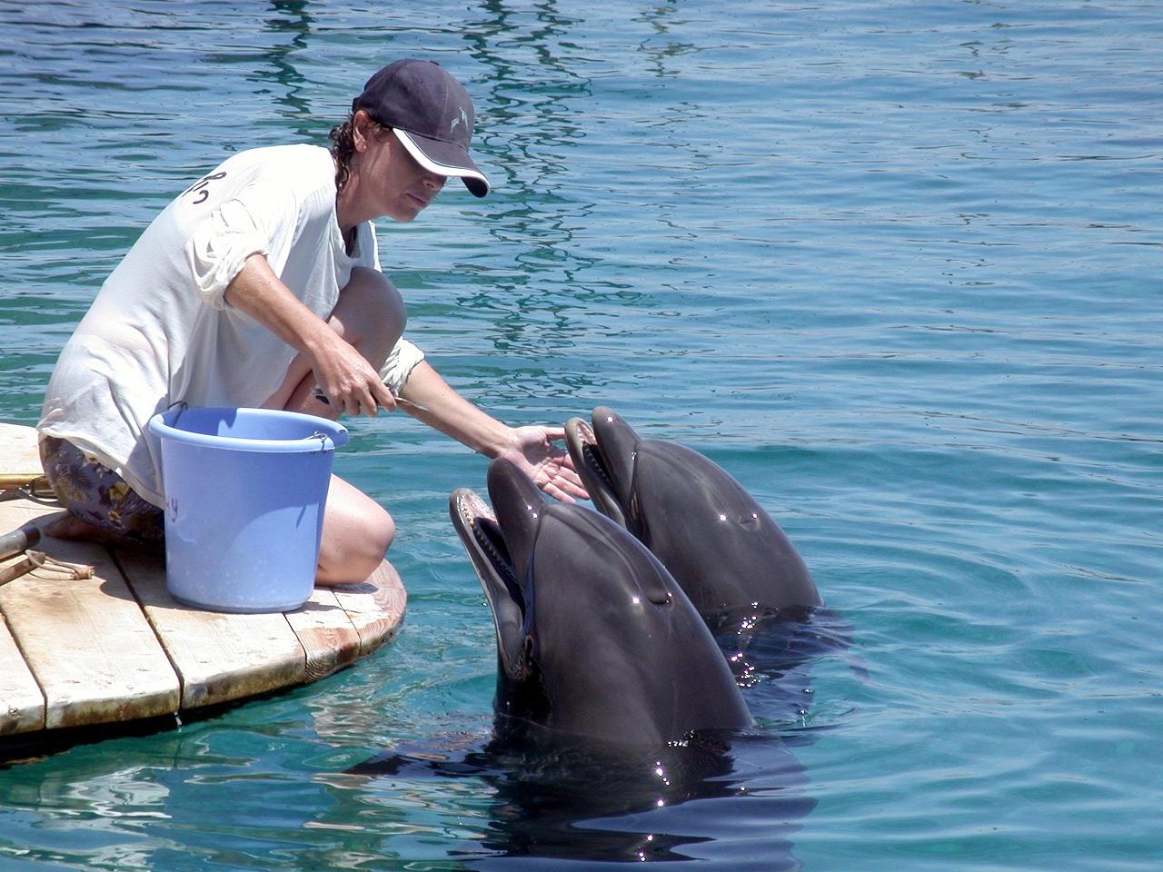 קנס גבוה לריף הדולפינים בשל הרס סביבתי